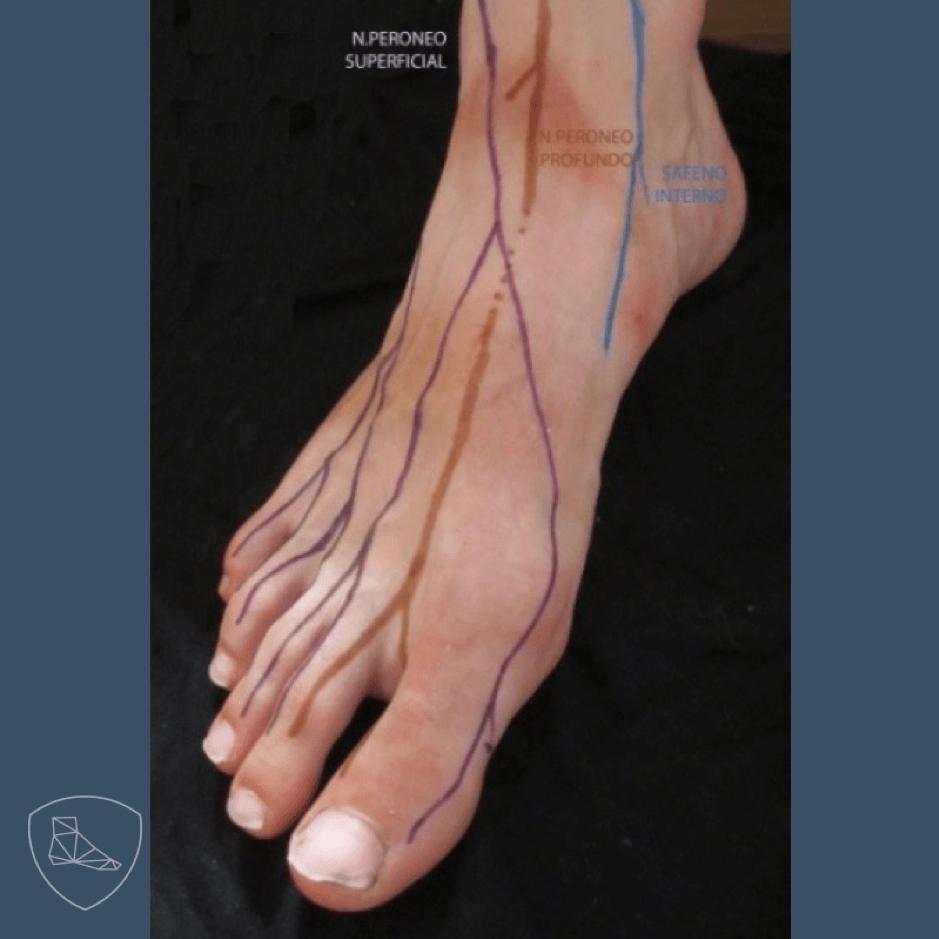 Nervios del dorso del pie