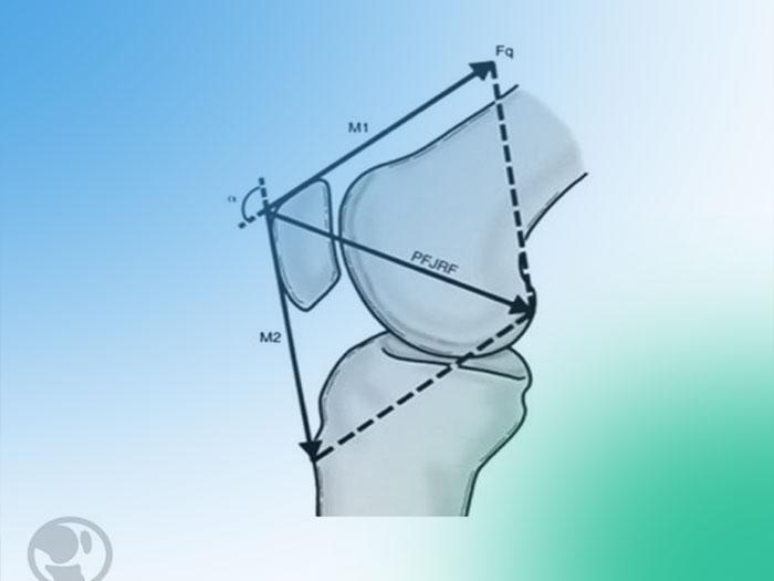 Descubre la anatomía y biomecánica de la articulación femoropatelar