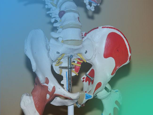 Displasia de cadera: descubre la Clasificación de Crowe y de Hartofilakidis