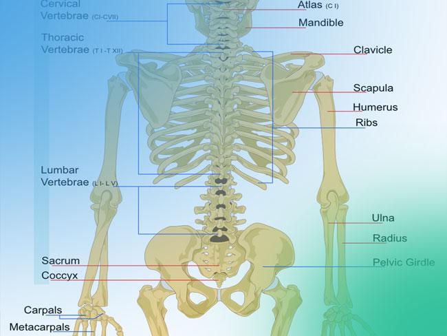 Osteotomía periacetabular de Ganz como tratamiento de la displasia de cadera del adulto. Paso a paso del abordaje mínimamente invasivo.